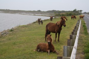 NEW FOR THURSDAY: Assateague Ruled Out As Possible Wind Farm Connection Site
