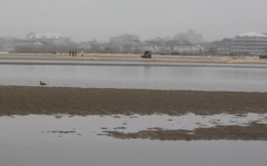 Bay Island Restoration Prep Work Begins