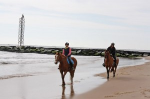 Beach Horseback Riding Now Offered