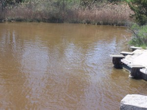 Brown Tide's Early Arrival In Creek Needs Monitoring