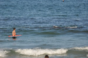 Humpback Whale Creates A Stir In Ocean City