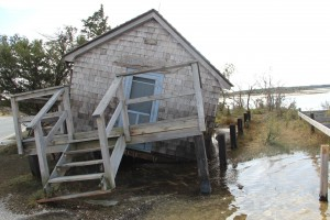 NEW FOR FRIDAY: Sandy Took Major Toll On Assateague Island's Federal Side