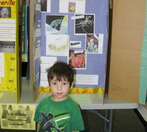 SES Holds Science Fair