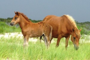 Online Auction Planned To Determine New Foal's Name
