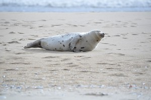 Precautions With Seals Urged