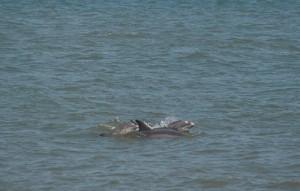 Recent Dolphin Mortality Event Remains A Concern