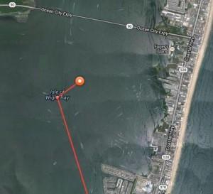 Tiger Shark Surfaced Twice In Back Bays Last Week