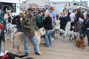 Boardwalkin' For Pets, Other Events Planned For Shelter; Adolfo's Hosting Dinner Fundraiser