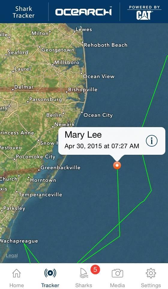 Great White Shark Mary Lee Tracked — VACA
