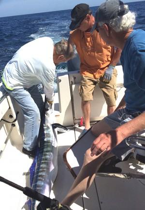 Season's First White Marlin Breaks Record