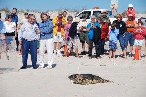 Lilly The Seal Reluctantly Returns To Ocean After Rehab Stint