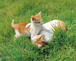 Groups Hoping To Change County's Feral Cat Law