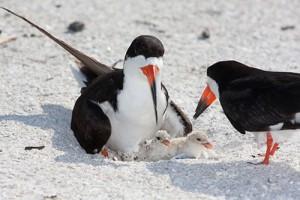 No Wake Urged To Protect Nesting Birds