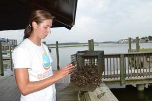 Residents, Bays Program Partner On Oyster Gardening Effort