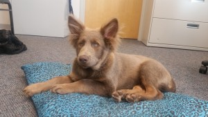 OCPD Tracks Stolen Pup From West OC To Pines Home