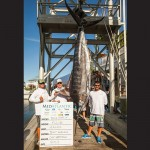 """The """"Makara"""" out of Ocean City weighed this 566-pound blue marlin on Wednesday during the MidAtlantic, taking first place in the division and earning $196,836. Photo courtesy Hooked on OC"""