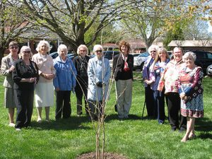 Daughters Of American Revolution Plant Crepe Myrtle On Worcester Prep School Grounds In Memory Of Deceased Chapter Member
