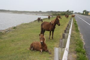 Assateague Island's Future Being Weighed As Migration Puts It At A Crossroads