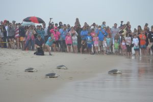 Dozen Turtles Released On Assateague Island