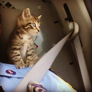 Kitten Rescued From Route 90 Bridge