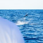 An angler on the Wrecker works to bring in a white marlin during Tuesday's trip offshore. Photo by Nick Denny