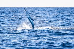 Ocean City Letter States 'Unconditional Opposition' To Fishing Canyon Designation