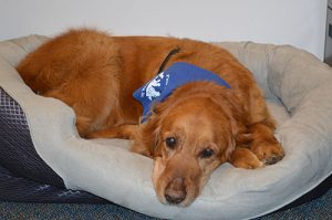 School's New Therapy Dog Wins Online Contest