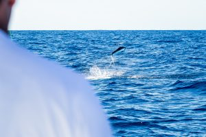 Private Group Chips In $5K For First White Marlin Prize; Season's First Billfish Could Now Be Worth $15,000
