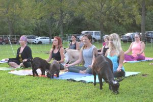 Goat Yoga Class Full Of Meaning, Fun And Laughs