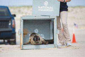 Seal Completes Short Rehabilitation