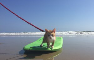 Pip The Beach Cat's Online Journey 'Doing A Lot Of Good'; Owners Planning Children's Book On Cat's Adventures