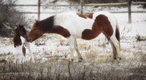 new-foal-robyn-phillips-3-300x165.jpg