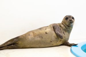 Seal Found On Del. Beach Recovering At National Aquarium