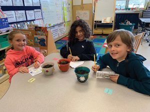 Ocean City Elementary Kindergartens Study The Life Cycle Of A Plant And Parts Of A Plant