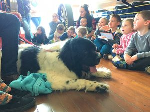 Little Learners Program Hosts Jeffrey The Newfoundland