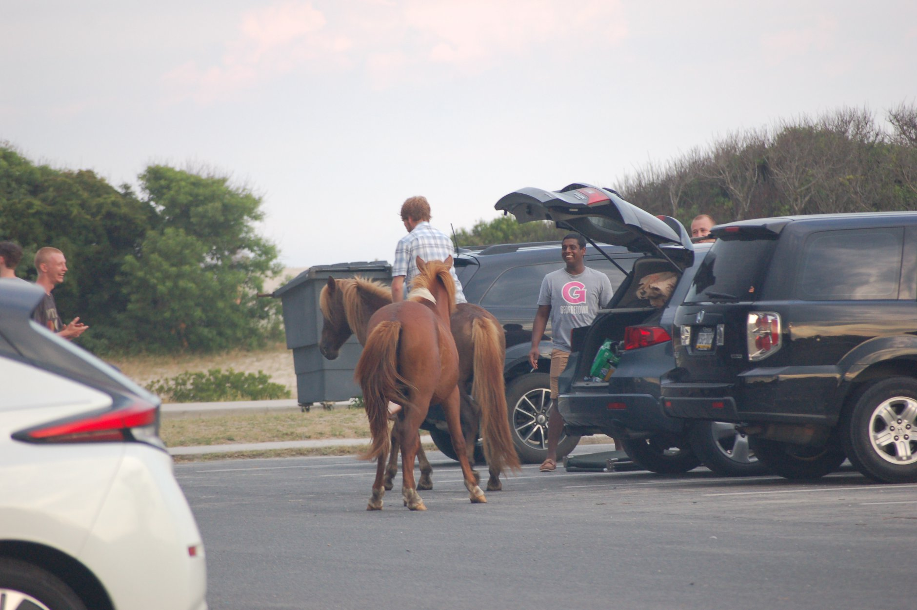 Man Charged For Riding Wild Horse On Assateague; Officials Offer Safety Reminders Ahead Of Weekend