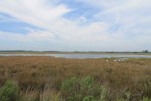 Partnership Results In Major Conservation Easement