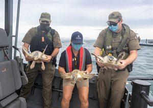 Three Rehabbed Sea Turtles Released Off Resort Coast