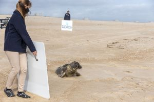 After Long, Complicated Rehab Journey, Seal Finally Released From Assateague