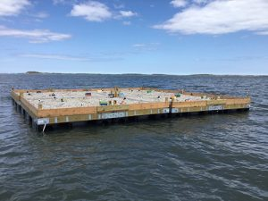 Partnership Eyes Artificial Nesting Islands For Watershed