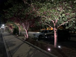 In 3-2 Council Vote, Berlin Will Return To Stringing Lights In Trees; Mayor Favored Uplighting Method