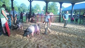 Worcester County Fair Returns To Snow Hill This Weekend
