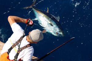 "Take ""Em Captain & Crew Still Catching Big Tuna"